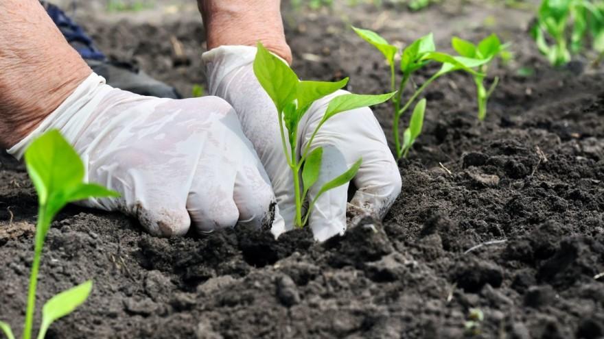 Opskrbljenost tla hranjivima i zašto je potrebno gnojiti?