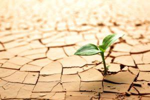 Utvrđivanje potrebe i planiranje gnojidbe